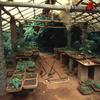 Medicinal plant nursery