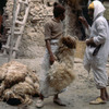 Skin-dressing in the Medina, workers