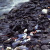Pollution of the island coast-line