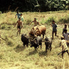 Farming in the Mananara biosphere reserve.