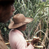 People of the Mananara biosphere reserve.