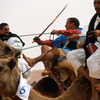 A camel-race during the Moussem of Tan Tan, a festival of nomad tribes