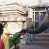 Woman receiving blessings from the temple elephant in Hampi