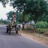 Farmer driving his cart.