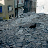 Historical quarter of Suleymanie, old quarter, paved street, cats, everyday lif