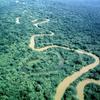 Rio Platano Biosphere reserve, forest, river
