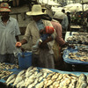 Everyday life, local market, fishmongers