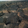Desertification in the Thies region, drought trees