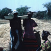Experimental area, African women in a corn-field