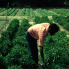 Experimental area, farm worker at work