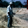 Experimental agricultural area, farmer working in a corn-field, farming