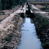 Farming experimental area for maize, irrigation channel