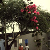 Everyday life, water gathering, bucket, street, houses, tree, flowers