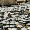 Market, general view, umbrellas