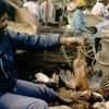 Sellerat the market of Tatanarine.
