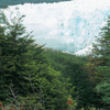Perito Moreno glacier, National park, mountainous forest