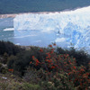 Perito Moreno glacier, National park, , mountainous plants