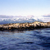 Penguins and seals, Patagonian region, marine animals