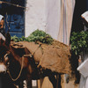 Small trade in the Medina, donkey