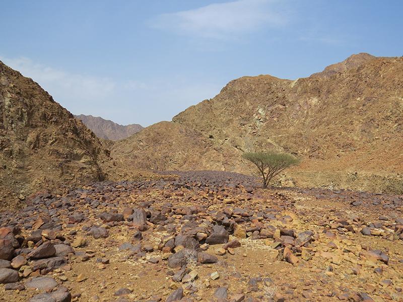 Wadi Wurayah Biosphere Reserve, United Arab Emirates