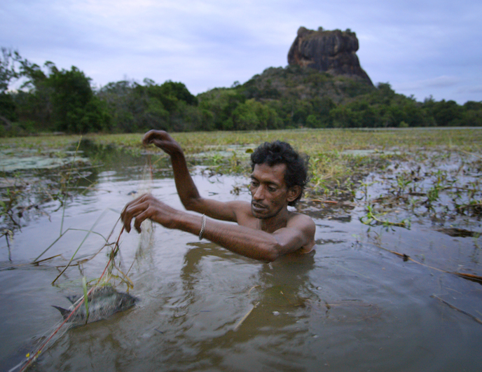Pêcheur au Sri Lanka.