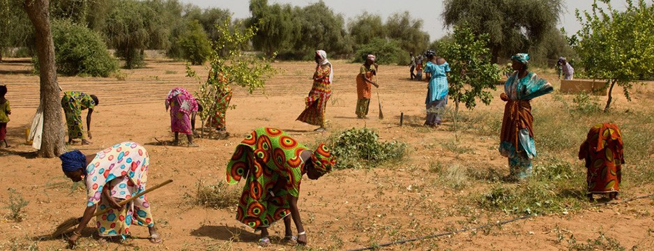 Great Green Wall initiative - Growing a World Wonder © UNCCD