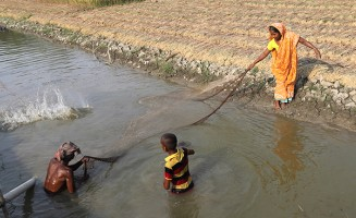 Catching fish with a net in Khulna, Bangladesh. Photo Yusuf Tushar / Worldfish from Flick, Creative Commons