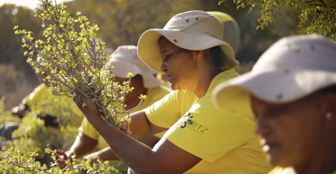 Ecosystem restoration and carbon capture project © UNESCO/ Gouritz Biosphere Reserve