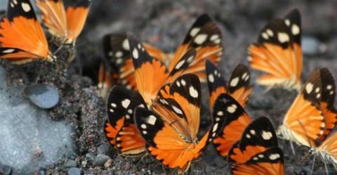Oxapampa-Asháninka-Yanesha Biosphere Reserve Peru
