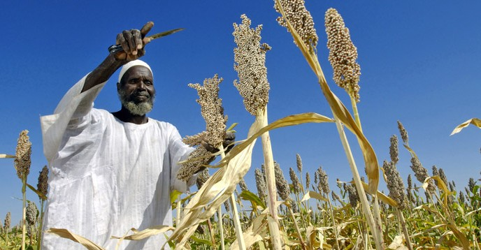 Sorgum farmer in Sudan. © UN Photo/ Fred Noy