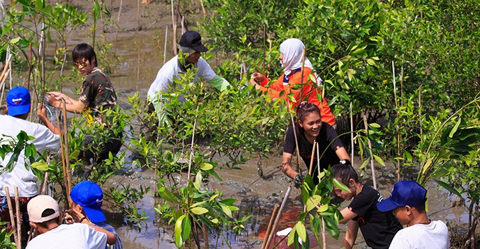 Young volonteers participate in a mangrove restoration project, Thailand. © Sura Nualpradid / Shutterstock.com