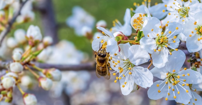 There are about 20,000 species of wild bees alone, plus some species of butterflies, moths, wasps, beetles, birds, bats and other vertebrates that contribute to pollination. © Georgiy Mykhalchuk / Shutterstock.com